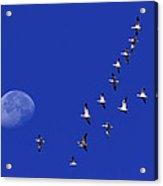 Prairie Migration Acrylic Print
