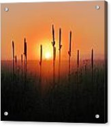 Prairie Sentinels Acrylic Print