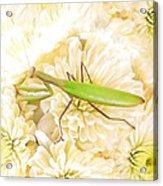 Praying Mantis On A Flower Boquet Acrylic Print