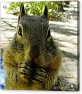 Praying Nuts Acrylic Print by DJ Laughlin