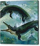 Pre-historic Crocodiles Eating A Fish Acrylic Print
