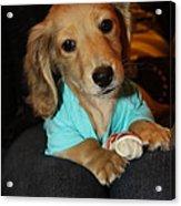 Precious Puppy Acrylic Print