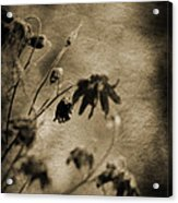 Preserved Dreams Acrylic Print by Terrie Taylor