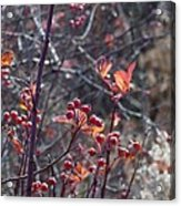 Presque Isle Fall 2009 Acrylic Print