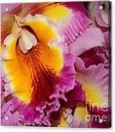 Pretty And Colorful Orchids Acrylic Print