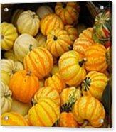Pretty As A Pumpkin Acrylic Print
