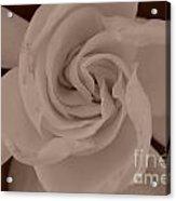 Pretty Flower Sepia Acrylic Print