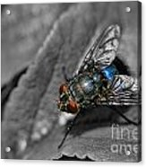 Pretty Fly For A Fly Guy Acrylic Print