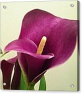 Pretty IIn Purple Acrylic Print