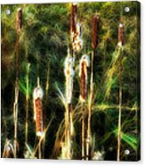 Pretty In A Ditch Acrylic Print