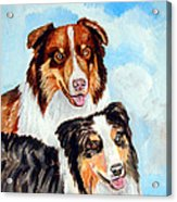 Pretty Pair - Australian Shepherd Acrylic Print by Lyn Cook