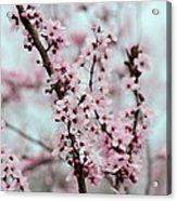 Pretty Pink Flowering Tree Acrylic Print