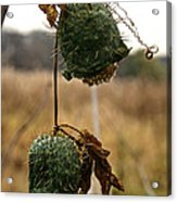 Prickly Bells Acrylic Print