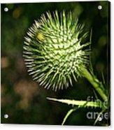 Prickly Globe Acrylic Print