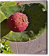 Prickly Pear Acrylic Print