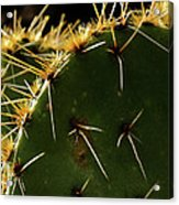 Prickly Pear Dangerous Beauty - Greeting Card Acrylic Print