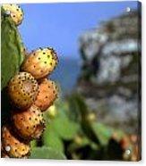 Prickly Pears Acrylic Print