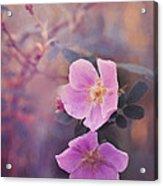 Prickly Rose Acrylic Print