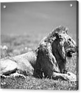 Pride In Black And White Acrylic Print