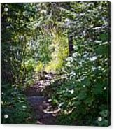 Priest Lake Trail Series IIi - Trail Shadows Acrylic Print