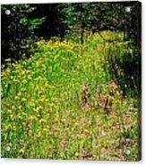 Priest Lake Trail Series Iv - Small Meadow Acrylic Print