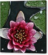 Primo Waterlily Acrylic Print