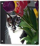 Princess The Cat And Tulips Acrylic Print