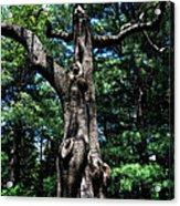 Princess Tree Acrylic Print