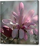 Pristine Pastels Acrylic Print