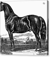 Prize Horse, 1857 Acrylic Print
