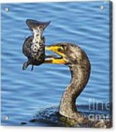 Prized Catch Acrylic Print