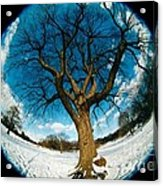 Prospect Park Tree Acrylic Print