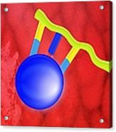Protein Synthesis, Artwork Acrylic Print by Gombert, Sigrid