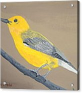 Prothonotary Warbler Acrylic Print