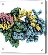 Protozoan Rna-binding Protein Complex Acrylic Print