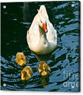 Proud Mother  Acrylic Print