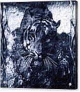 Prowler Acrylic Print