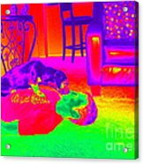 Psychedelic Doggy Love Acrylic Print