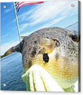 Puffer Love Acrylic Print by Laurence Oliver