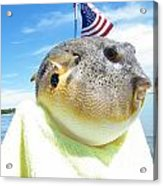 Puffer One Acrylic Print by Laurence Oliver