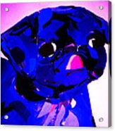 Pug Pup Acrylic Print