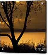 Pugent Sound Silhouetted Tree Acrylic Print