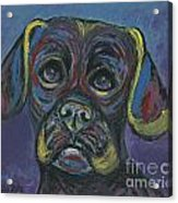 Puggle In Abstract Acrylic Print
