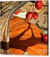 Pumpkin Berries Acrylic Print