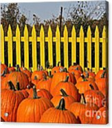 Pumpkin Corral Acrylic Print