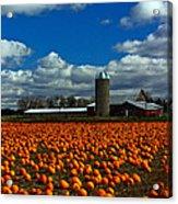 Pumpkin Farm Acrylic Print