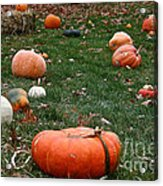 Pumpkin Field Acrylic Print