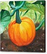 Pumpkin In The Garden Acrylic Print