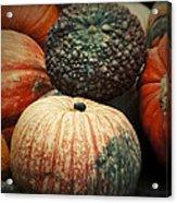 Pumpkin Mix Acrylic Print