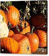Pumpkin Palooza Acrylic Print